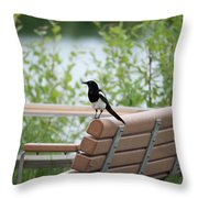 Black-billed Magpie Pica Hudsonia Throw Pillow