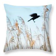 Black Bird In Cat Tails Throw Pillow