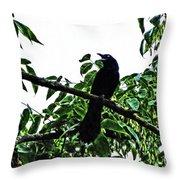Black Bird Sings Throw Pillow