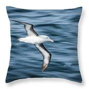 Black-browed Albatross Gliding Over Deep Blue Waves Throw Pillow