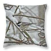Black Capped Chickadee - Poecile Atricapillus Throw Pillow