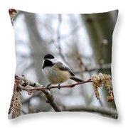 Black-capped Chickadee 20120321_39a Throw Pillow