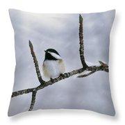 Black-capped Chickadee, Alberta Throw Pillow