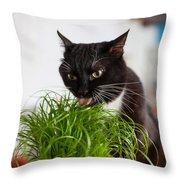 Black Cat Eating Cat Grass Throw Pillow
