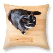 Black Cat Looking At You Throw Pillow