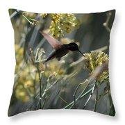 Black Chinned Hummingbird In Flight Throw Pillow