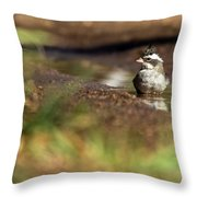Black-crested Finch Throw Pillow