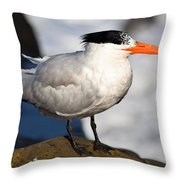 Black Crested Gull Throw Pillow