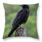 Black Crow Pearched On A Post Throw Pillow