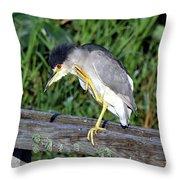 Black Crown Night Heron Scratching Throw Pillow