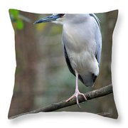 Black Crowned Night Heron IIi Throw Pillow