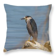 Black Crowned Night Heron In Colorado Throw Pillow