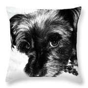 Black Dog Looking At You Throw Pillow