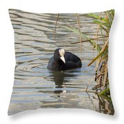 Black Duck On Pond Throw Pillow