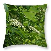 Black Elderberry - Sambucus Nigra_0261black Elderberry - Sambucus Nigra Throw Pillow
