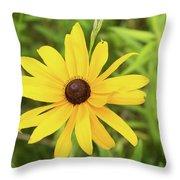 Black Eyed Susan IIi Throw Pillow