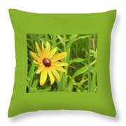 Black Eyed Susan V Throw Pillow