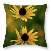 Black Eyed Susans 3276 H_2 Throw Pillow