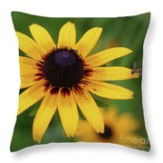 Black Eyes Susan And Friend Throw Pillow