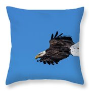 Black Feather Eagle Hunting Throw Pillow