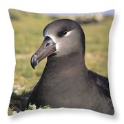 Black Footed Albatross Throw Pillow