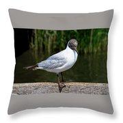Black-headed Gull - Larus Ridibundus Throw Pillow