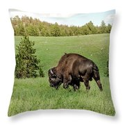 Black Hills Bull Bison Throw Pillow