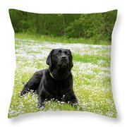 Black Lab Laying In A Field Throw Pillow