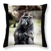 Black Macaque Monkey Sitting Throw Pillow