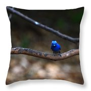 Black-napped Monarch Throw Pillow