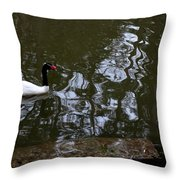 Black Neck Swan In Review Throw Pillow