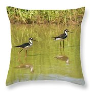Black Necked Stilt, In The Pond In The Galapagos Throw Pillow