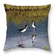 Black-necked Stilts Throw Pillow