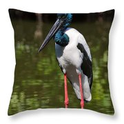 Black-necked Stork Throw Pillow