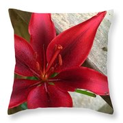 Black Center Day Lily  Throw Pillow
