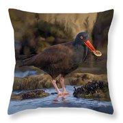 Black Oyster Catcher Throw Pillow