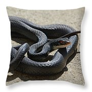 Black Racer Throw Pillow