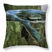 Black Rat Snake Throw Pillow