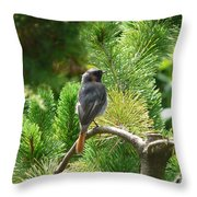 Black Redstart Throw Pillow