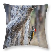 Black-rumped Flameback Aka Lesser Goldenback Throw Pillow