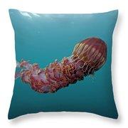 Black Sea Nettle Chrysaora Achlyos Throw Pillow