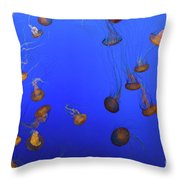 Black Sea Nettle Jellyfish - Monterey Throw Pillow