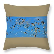 The Black Skimmers Throw Pillow