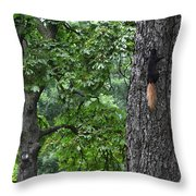 Black Squirrel With Blond Tail  Throw Pillow