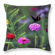 Black Swallowtail Butterfly In August  Throw Pillow