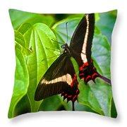 Black Swallowtail Butterfly In Iguazu Falls National Park-brazil  Throw Pillow