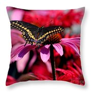 Black Swallowtail Butterfly On Coneflower Square Throw Pillow