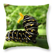 Black Swallowtail Caterpillar Throw Pillow