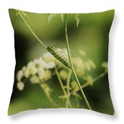 Black Swallowtail Caterpillar Throw Pillow
