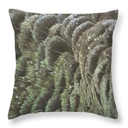 Black Swan Feathers Throw Pillow